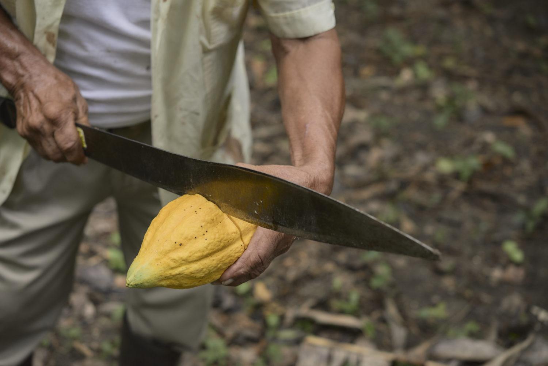 Ajaw maya chocolate tour Bullet Tree. Photo: Leonardo Melendez / Sera Images